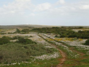 wild flowers on the west coast