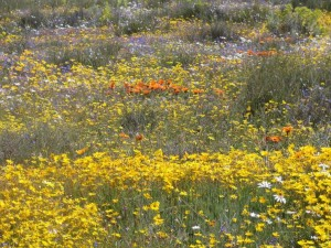 W-C Spring Flowers Eastbury Cottage