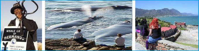 Hermanus Whale Walk