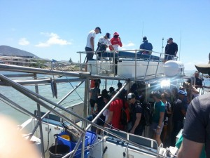 Boarding the Shark Cage Diving Boat